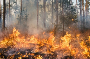 A high res photo of a forest fire in progress